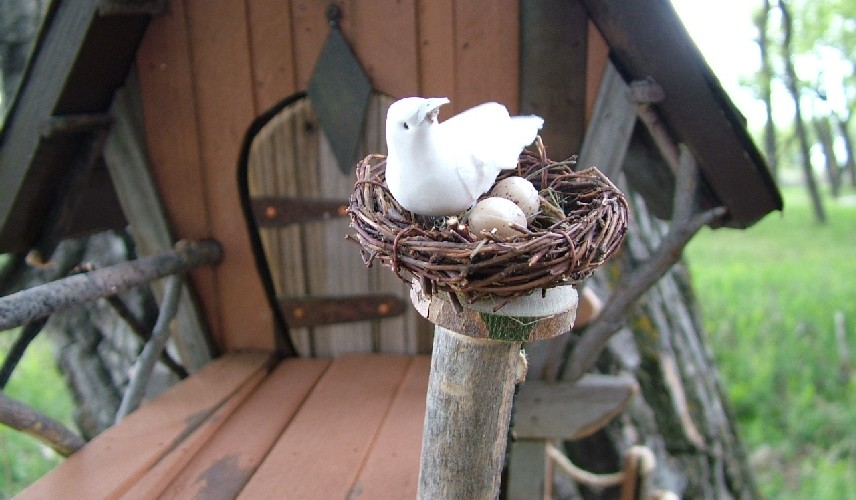 bird with eggs